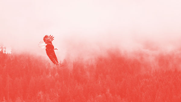 Die Adler kommen